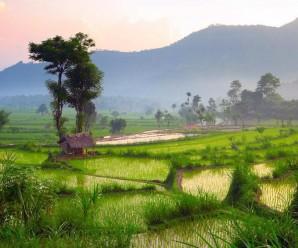 Des paysages d'une rare beauté les plus beaux champs de riz à travers le monde