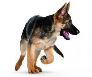 Des exercices pour apprendre le rappel du chien